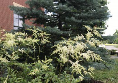 Traditions Garden Tree