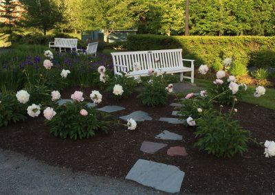Memorial Garden Peonies