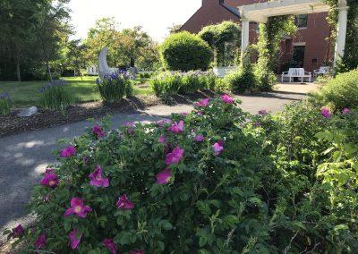 Walkway Garden